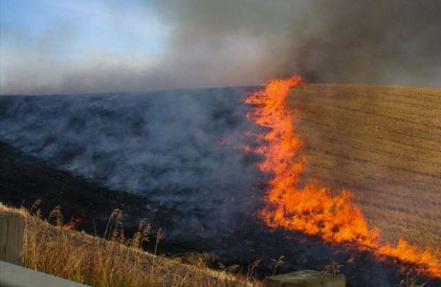 Απαγορεύεται αυστηρά να καίνε τις καλαμιές στα χωράφια!