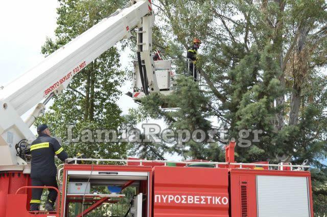 Χωρίς ρεύμα το Ασπρονέρι - Έπεσαν δέντρα απ' τον αέρα