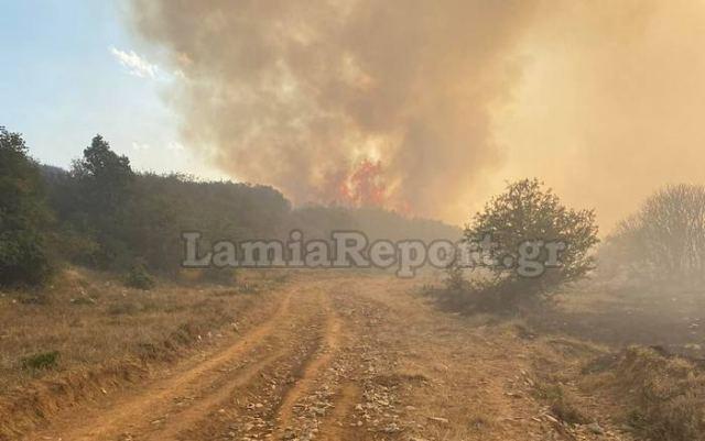 Μάχη με τις φλόγες στο Λογγίτσι - Δείτε ΒΙΝΤΕΟ και ΦΩΤΟ