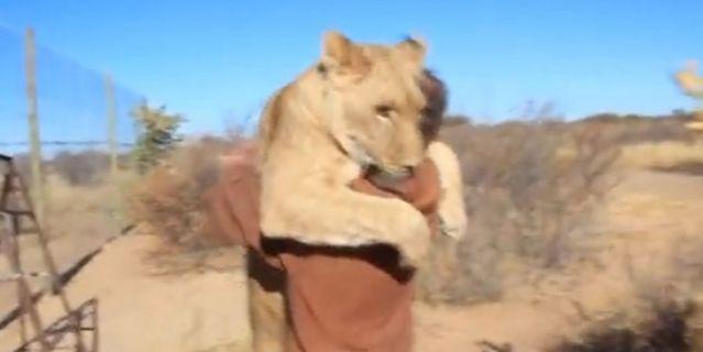 Απίστευτο βίντεο: Η αγκαλιά λέαινας στον άνθρωπο που τη μεγάλωσε