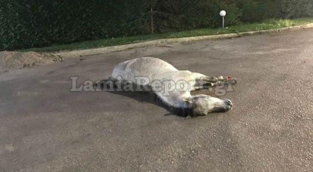 Στυλίδα: Τροχαίο με άλογο τα ξημερώματα - Δείτε εικόνες