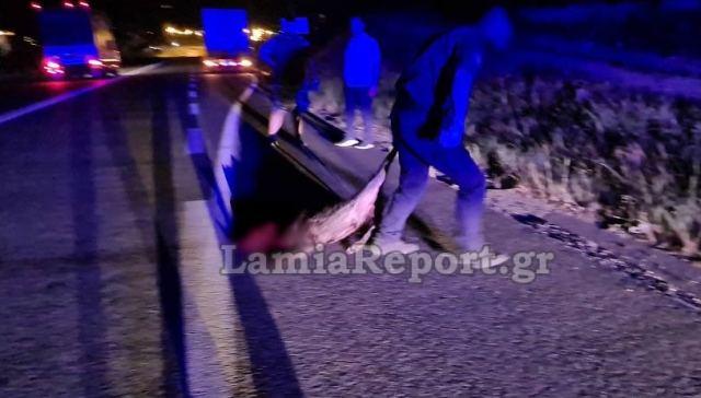 Λαμία: Κοπάδι από αγριογούρουνα προκάλεσε τροχαίο (ΒΙΝΤΕΟ-ΦΩΤΟ)