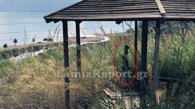 Φρίκη στη Φθιώτιδα: Κρέμασαν σκύλο - Σκληρές εικόνες