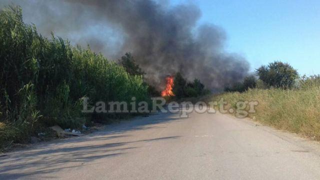 Νέα πυρκαγιά έξω από τα Καμένα Βούρλα - Σηκώθηκαν τα PZL (ΦΩΤΟ)