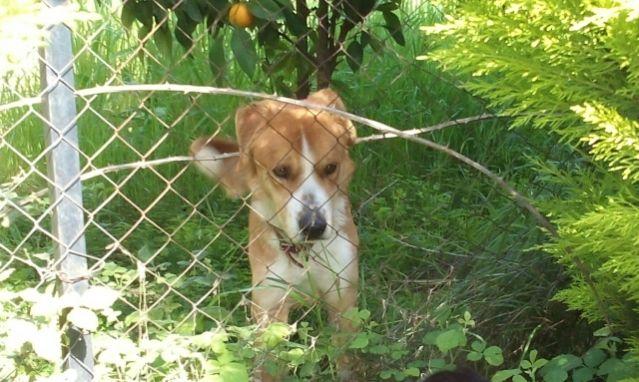Αυτό το σκυλάκι έχει ανάγκη από ένα σπίτι και αγάπη - Μπορούμε να το βοηθήσουμε;