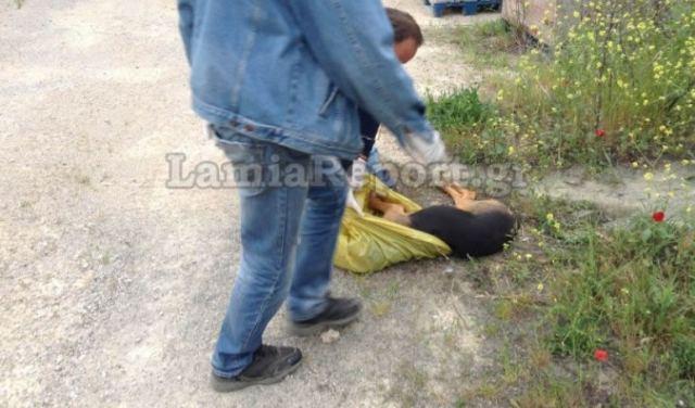 Σάλος στη Φθιώτιδα: Δήμαρχος διώκεται γιατί φέρεται να έριξε φόλες σε αδέσποτα