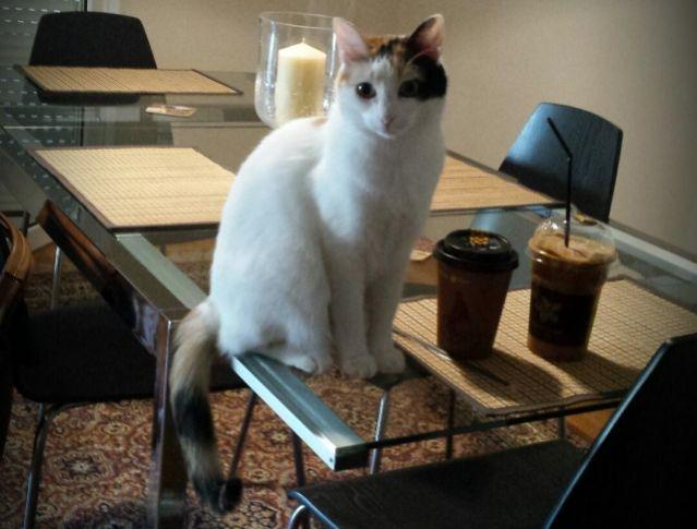 fa6637afcacc Χάθηκε η γάτα της φωτογραφίας - Βοηθήστε να βρεθεί